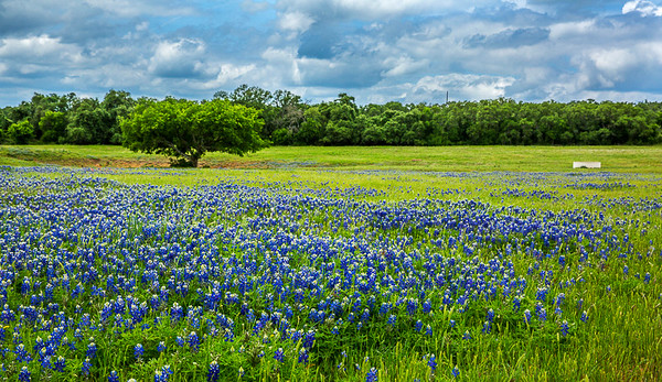 2017_4_15-16 Texas Hill Country-503-2