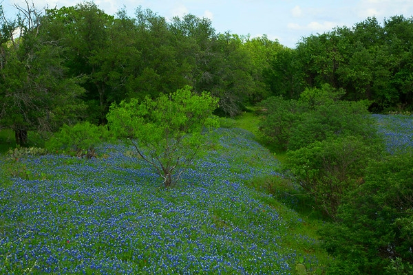2017_4_15-16 Texas Hill Country-91