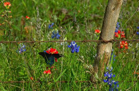 2017_4_15-16 Texas Hill Country-64