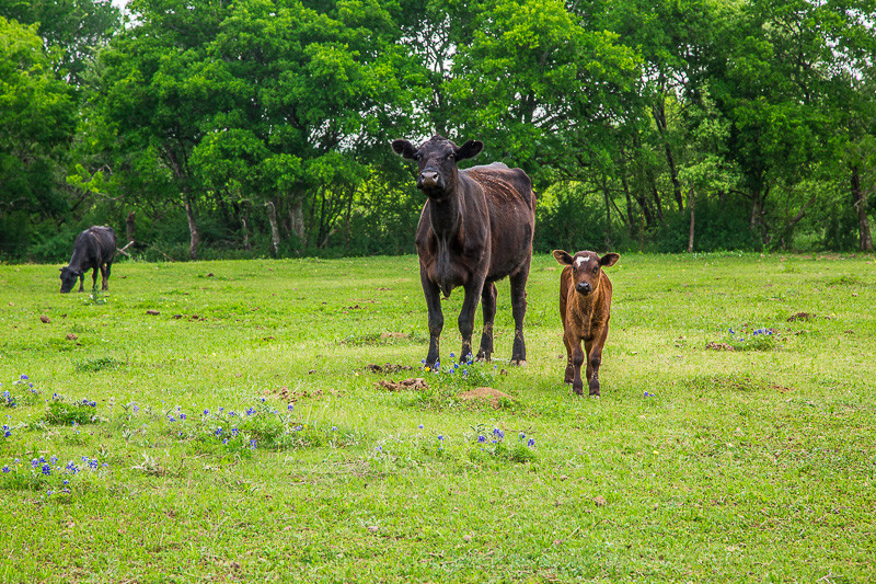 2017_4_15-16 Texas Hill Country-542