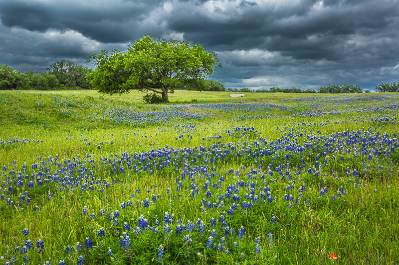 2017_4_15-16 Texas Hill Country-386-2