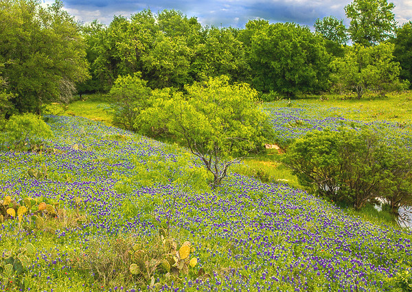 2017_4_15-16 Texas Hill Country-2