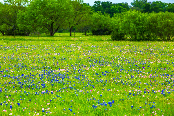 2017_4_15-16 Texas Hill Country-808
