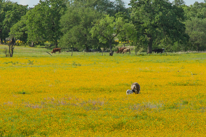 2017_4_15-16 Texas Hill Country-263