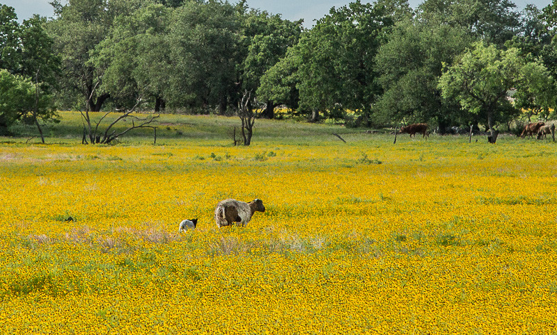 2017_4_15-16 Texas Hill Country-259