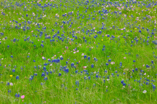 2017_4_15-16 Texas Hill Country-775