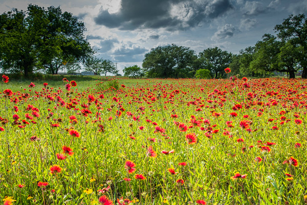 2017_4_15-16 Texas Hill Country-287