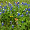2017_4_15-16 Texas Hill Country-508-2