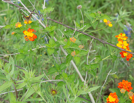 2017_4_15-16 Texas Hill Country-54