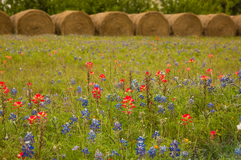 2017_4_15-16 Texas Hill Country-119-2