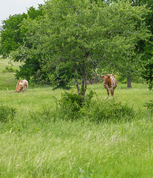 2017_4_15-16 Texas Hill Country-945