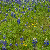 2017_4_15-16 Texas Hill Country-464-2