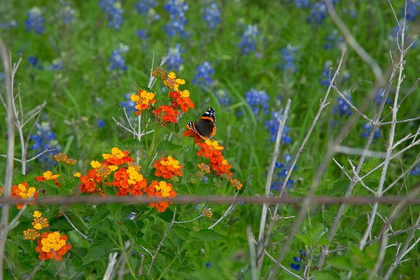 2017_4_15-16 Texas Hill Country-52
