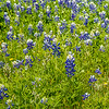 2017_4_15-16 Texas Hill Country-461-2