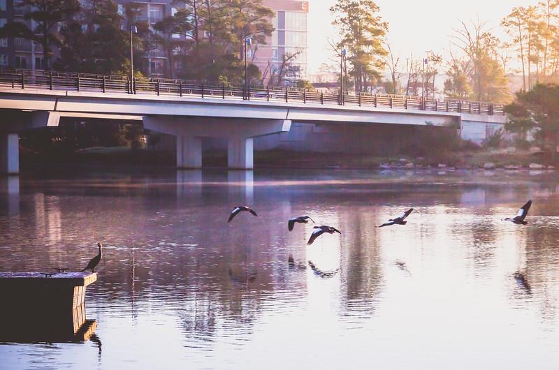 2016_1_13 Northshore Park Woodlands Sunrise-4491-2