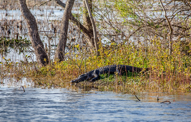2016_2_13 Brazos Bend State Park-5486