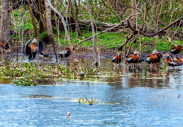 2016_2_13 Brazos Bend State Park-5356