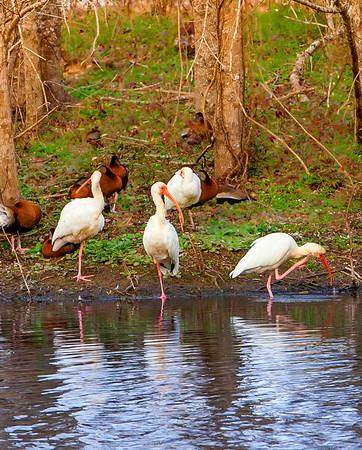 2016_2_13 Brazos Bend State Park-5382