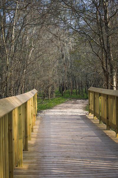 2016_2_13 Brazos Bend State Park-5304
