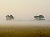 270-0381 Ground Fog, Richmond, Texas August 04, 2010