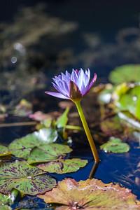 Zilker Botanical Garden, Austin TX