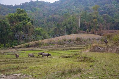 ChiangMia-Trekking-487