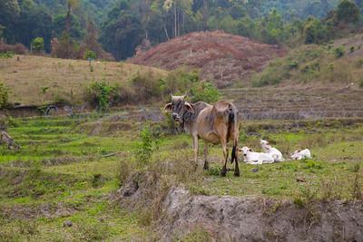 ChiangMia-Trekking-495