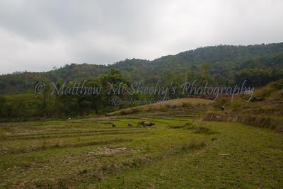 ChiangMia-Trekking-488