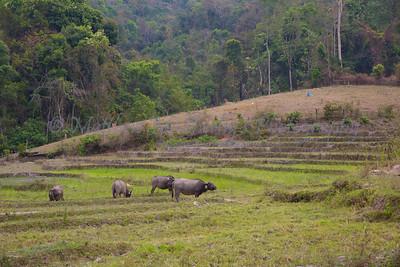 ChiangMia-Trekking-489
