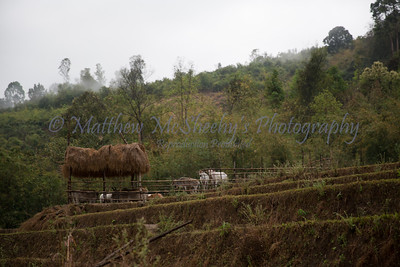 ChiangMia-Trekking-628