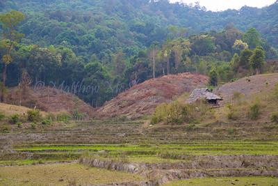 ChiangMia-Trekking-492