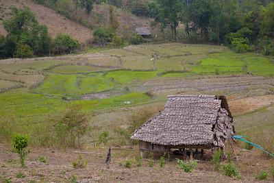 ChiangMia-Trekking-483