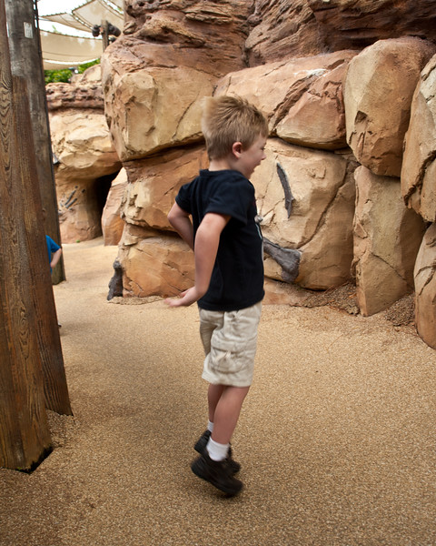 Vincent playing in the Boneyard in Dino Land at the Animal Kingdom.
