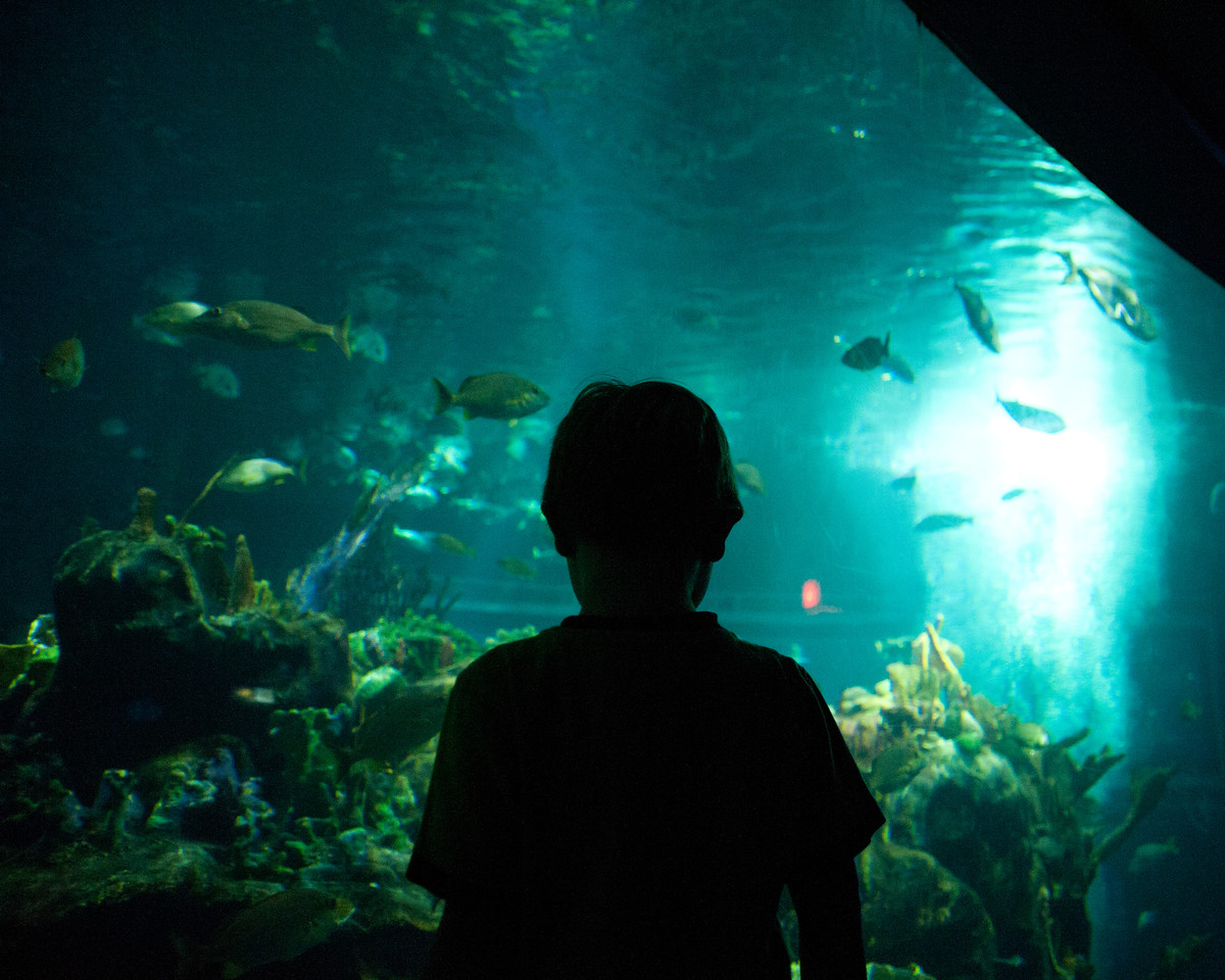 Vincent watching the fish in The Seas at Epcot.