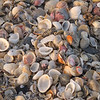 A fresh pile of shells