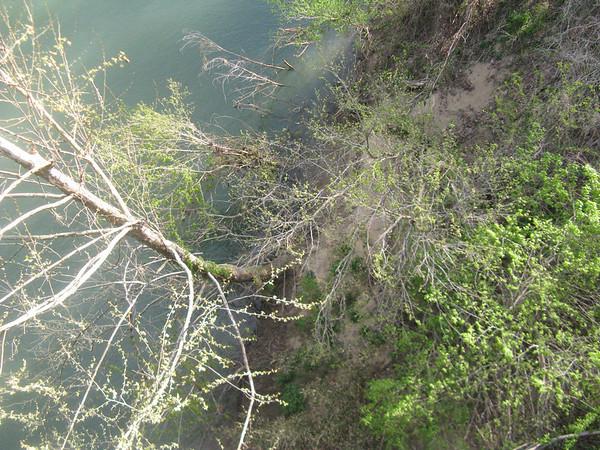 The Buffalo River