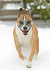 Happy Dog!<br /> <br /> My dogs Sadie and Emma really enjoyed the<br /> Great Dallas Snowfall of 2011.