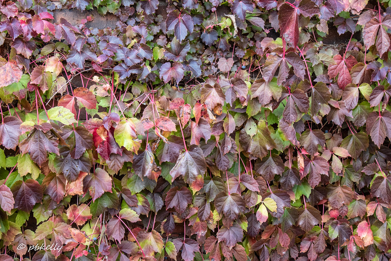 Leaves on a wall.