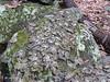 Interesting lichen on this rock.