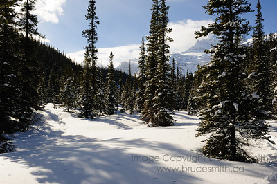 Winter mountain meadow with deep powder snow - Mistaya River, Banff National Park