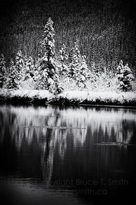 Winter reflection