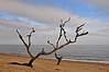 Higbee Beach - Cape May, NJ - 2010