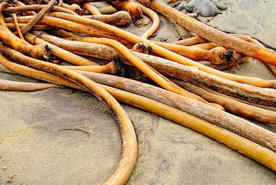 Kelp Lines