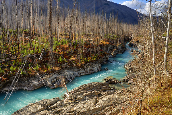 Vermilion River, British Columbia, a few years after a forest fire.