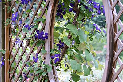 Garden at Biltmore
