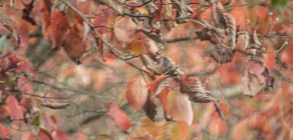 The Vines -Autumn