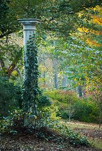 The Vines- Autumn