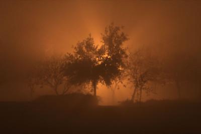 Fog On Fire