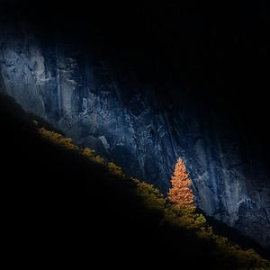 The Tree v.s. El Capitan