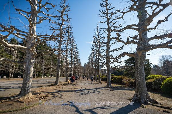 Winter in Tokyo - A stroll through Shinjuku Gyoen National Garden